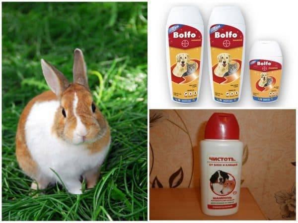 Так ли уж опасны кролики для нашего здоровья и благополучия? шесть основных мифов, которые нужно развеять.