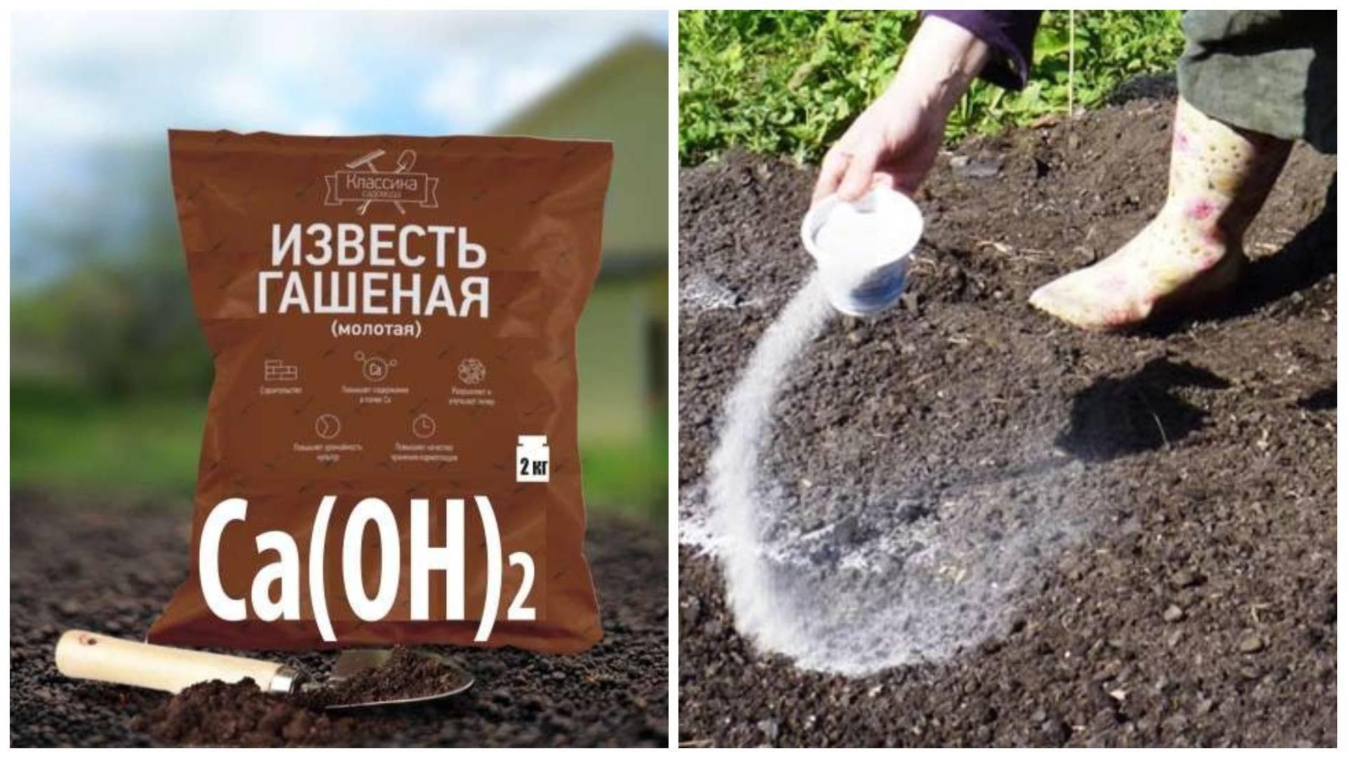 Как быстро избавиться от проволочника в картошке: лучшие методы