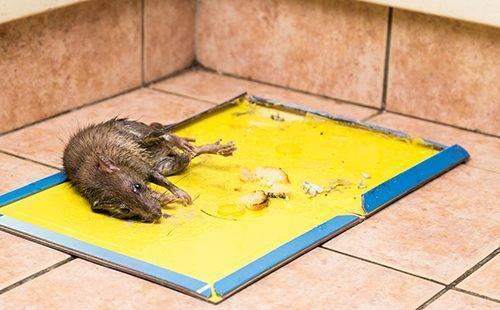 Отрава крысиная смерть