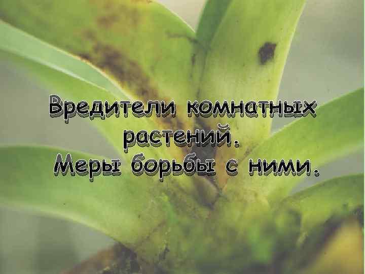 Вредители комнатных растений и болезни комнатных цветов