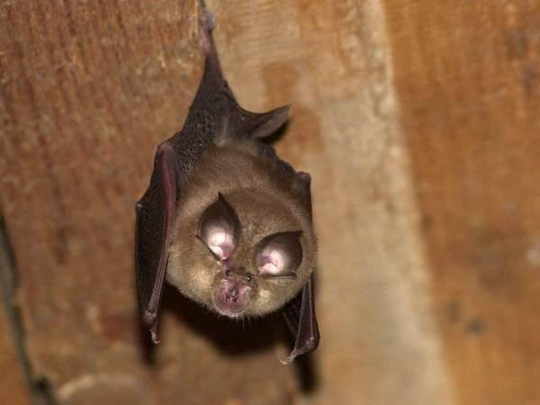Приметы о залетевшей в дом летучей мыши