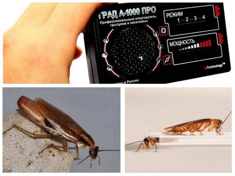 Лучший гель от тараканов — 9 эффективных марок