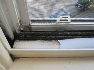 Что делать если на пластиковых окнах появилась плесень