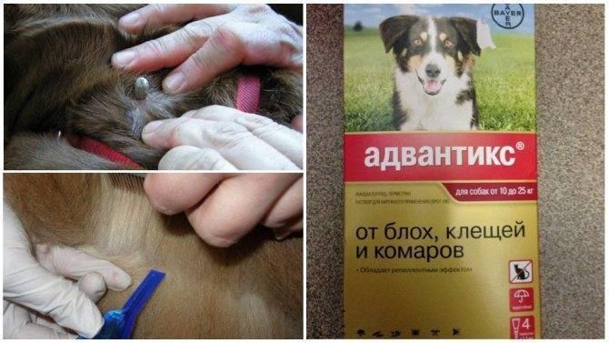 Рейтинг лучших капель от блох и клещей для собак