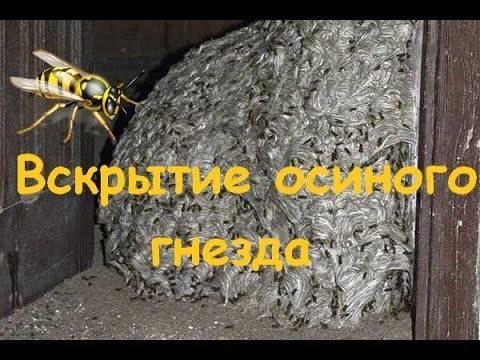 Избавляемся от пчелиного гнезда на балконе — простые и эффективные методы