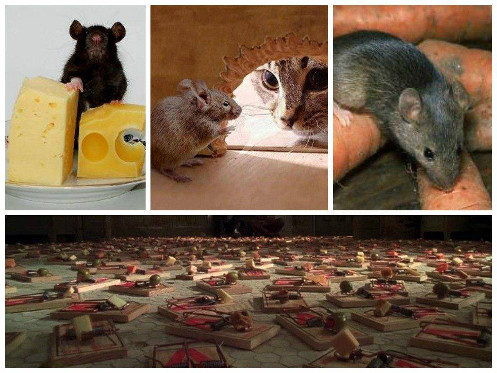 Если в доме завелись мыши: приметы наших предков