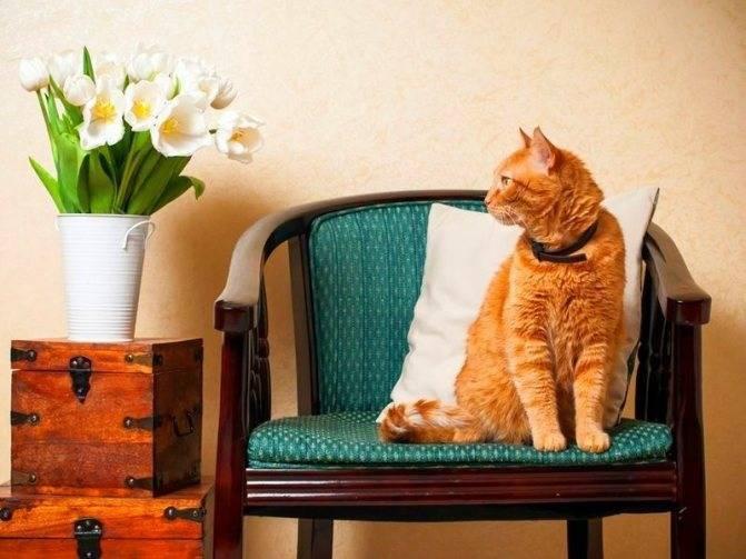 Ошейник от блох и клещей для кошек: как действует и сколько носить