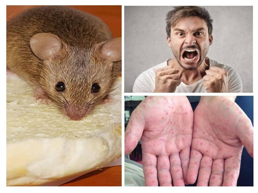 Болезни крыс и мышей: симптомы и лечение