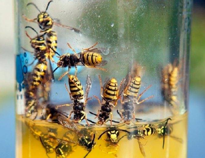 В доме поселились осы — как их истребить?