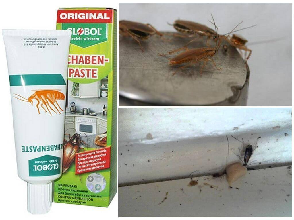 Боремся с тараканами с помощью средств global