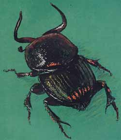 Кровососущие насекомые и постельные паразиты в квартире: виды и как избавиться