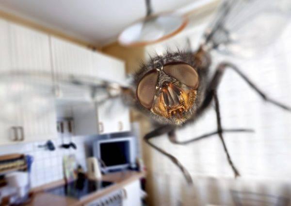 Все средства, которые помогут избавиться от мух в доме