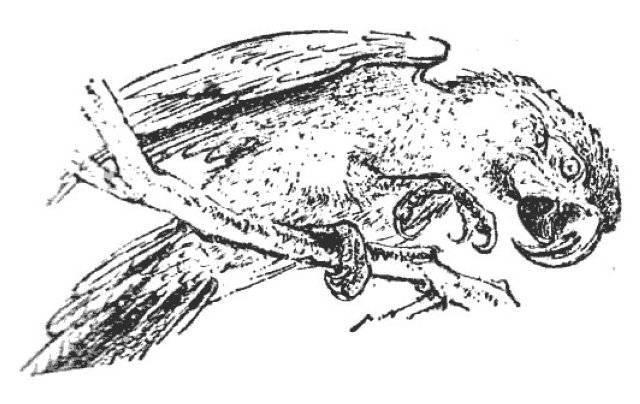 Как выглядит сверчок— фото и описание видов насекомого
