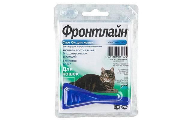 Как действуют капли от блох для кошек