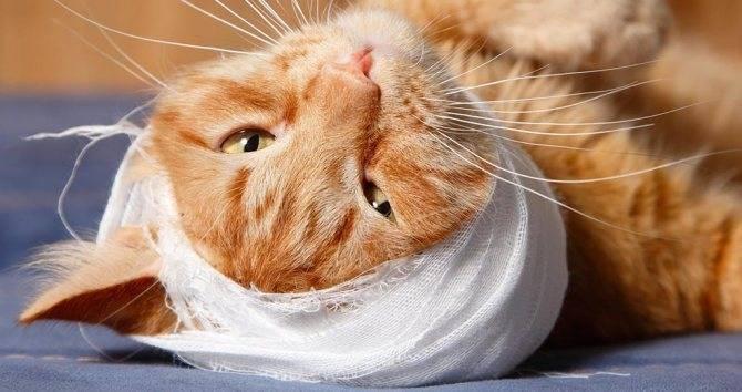 У кота после укуса клеща осталась шишка. у собаки появилась шишка: что делать