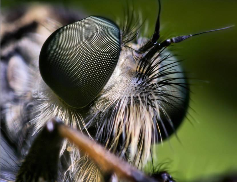 Состав пчелиной семьи: её развитие, содержание и функции