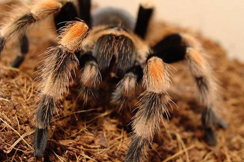 Неопасные и ядовитые виды пауков украины: чего ждать от встречи с членистоногими?