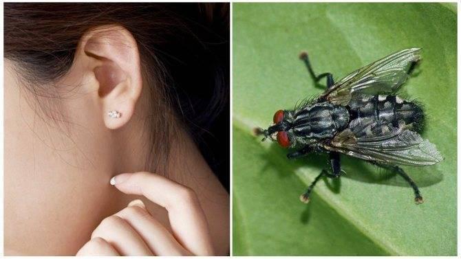 Что делать, если застрял таракан в ухе? как не допустить повторное проникновение