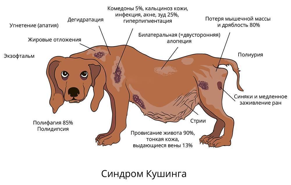 Собаку укусил клещ: что делать