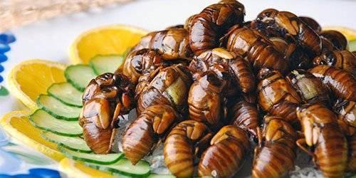 Майский жук: сонник и народные толкования
