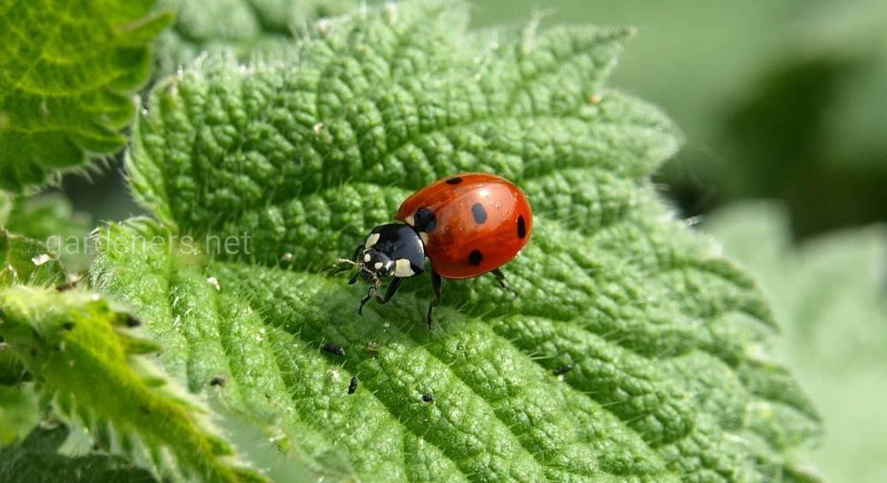 Жуков заказывали? где, как и каких полезных для сада и огорода насекомых можно купить