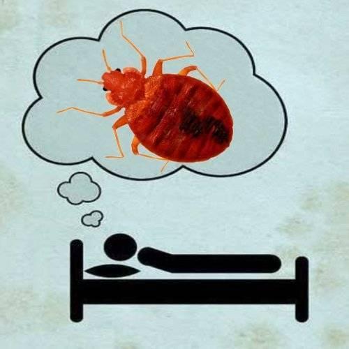 К чему снятся постельные клопы и как освободится от таких кошмаров? значение сна про клопов