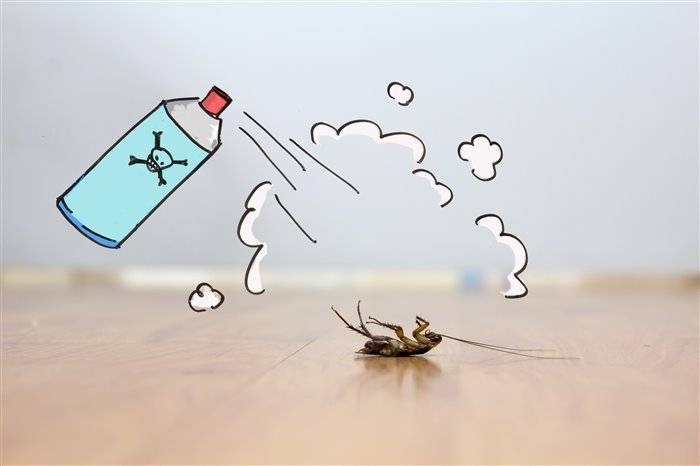 Борьба с тараканами в квартире: что и как применять