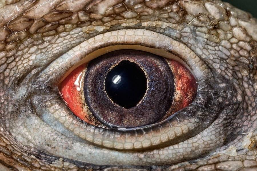 Сколько fps видит человеческий глаз
