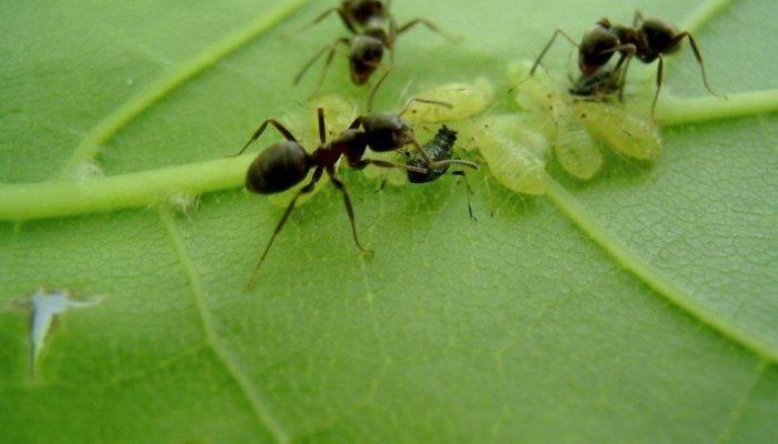 Семь тысяч ручьёв древнего истока — виды муравьёв