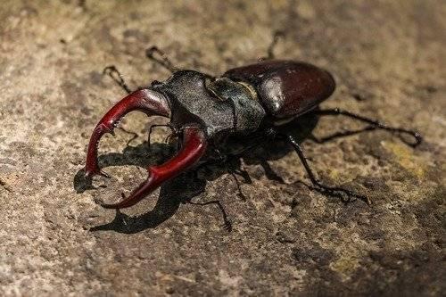 Приснились жуки