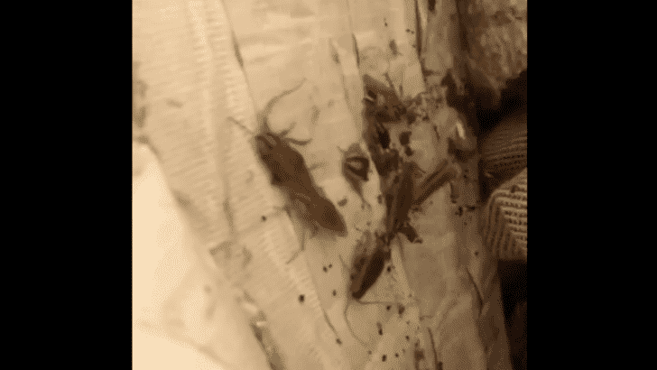 Чего больше всего боятся тараканы