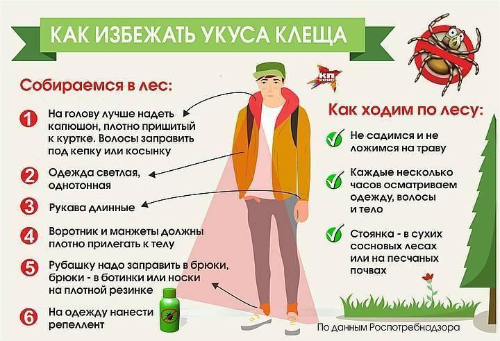 5 простых правил, как избежать укусов клещей в преддверии весны