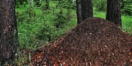 К чему снятся муравьи: раскрываем сонники