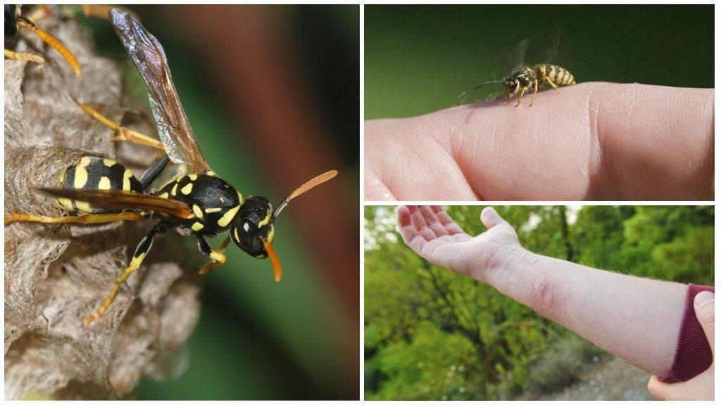 Укус пчелы: польза или вред