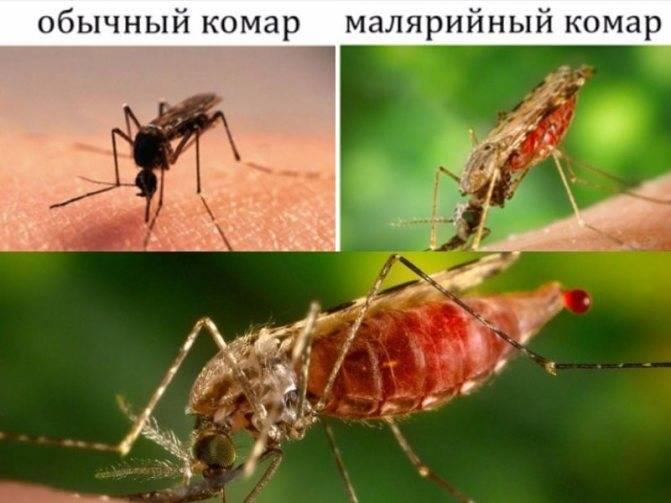 Есть четкий признак, как отличить укус комара от нападения клопа