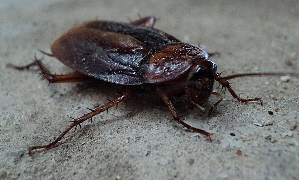 Чего боятся тараканы в квартире больше всего — все лучшие народные методы