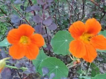 Паутинный клещ на розе: профилактика, признаки и 8 способов лечения