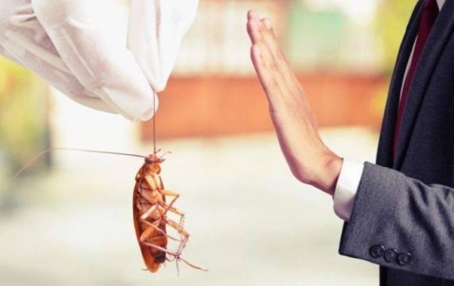 Какую опасность несут поселившиеся в квартире тараканы