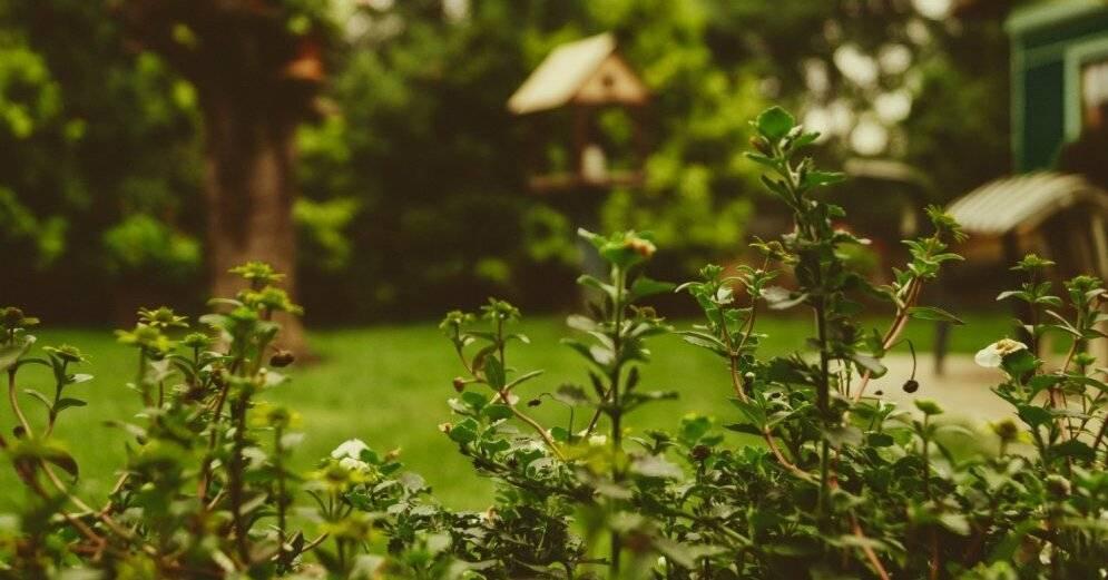 Экологично избавляемся от моли