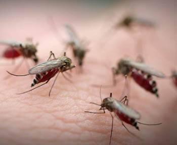 Средства от мошек и комаров своими руками