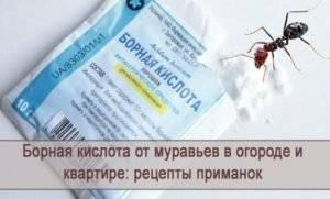 Как вывести муравьев с помощью борной кислоты