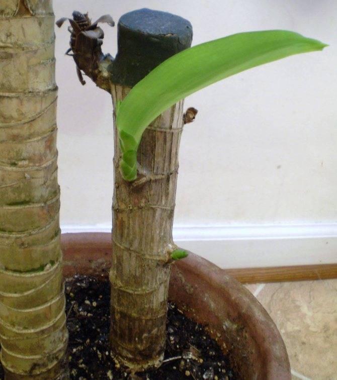 Мучнистый червец как бороться на комнатных растениях, средство актар