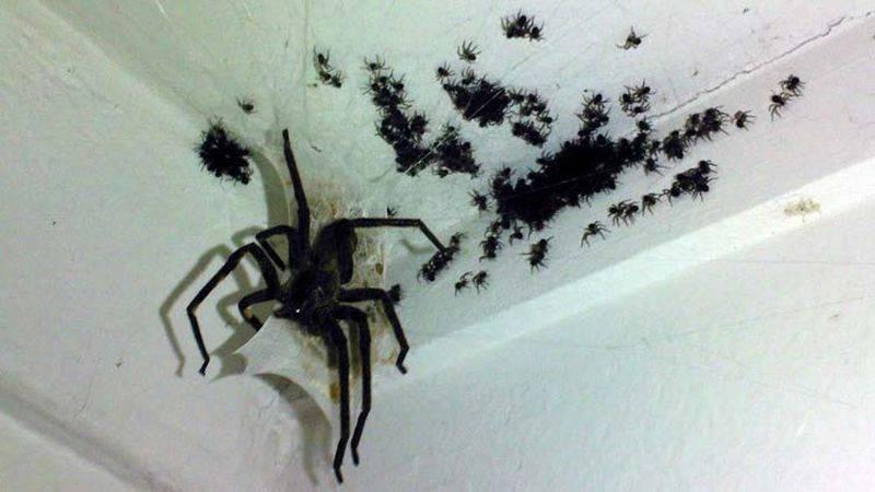 Избавляемся от пауков на даче и огороде своими руками