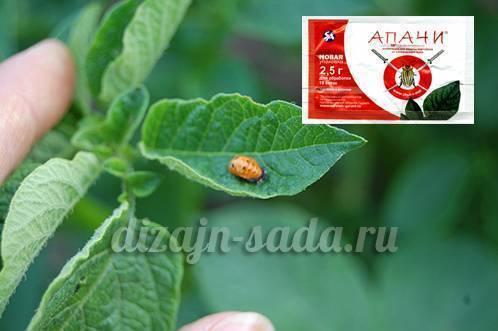 Инструкция по применению средства апачи от колорадского жука