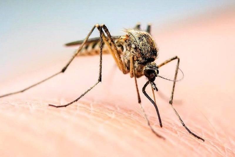 Как снять отек века от укуса комара и другого насекомого