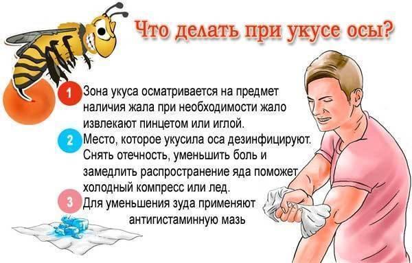 Укус мошки: первая помощь, устранение симптомов, меры предосторожности