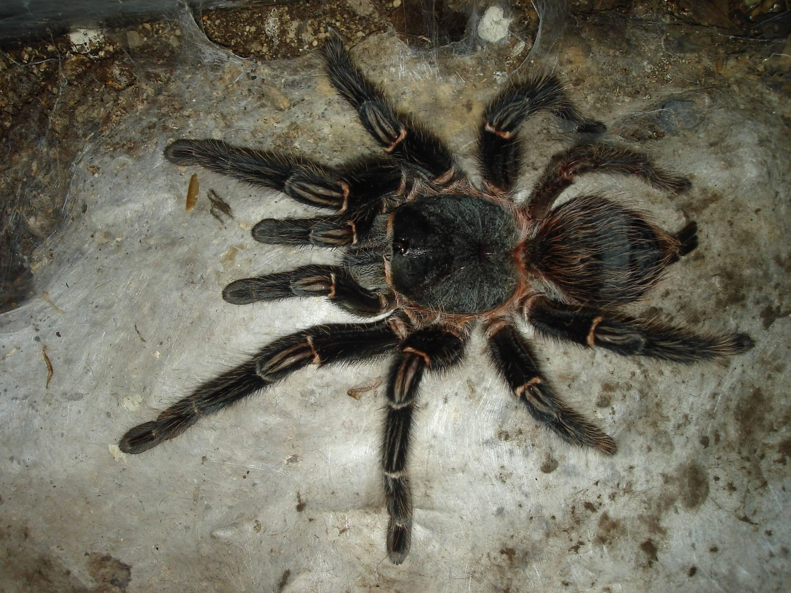 Чем кормить пауков