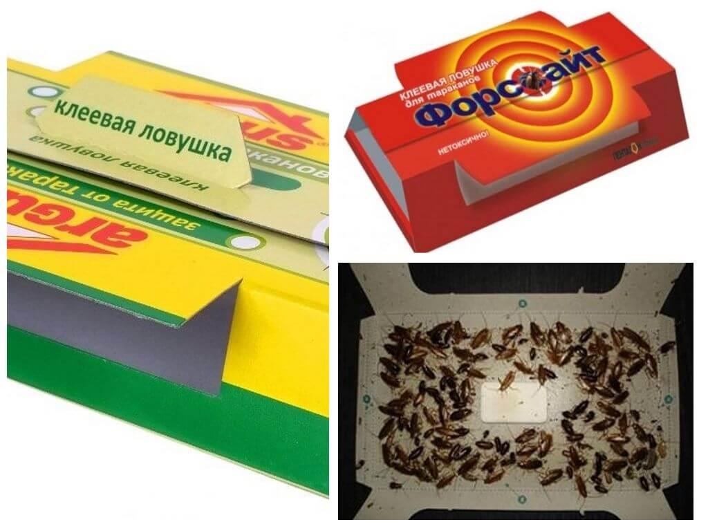 Какие ловушки для тараканов самые эффективные в квартире?