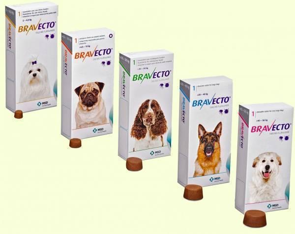 Таблетки от блох для собак и кошек какие выбрать?