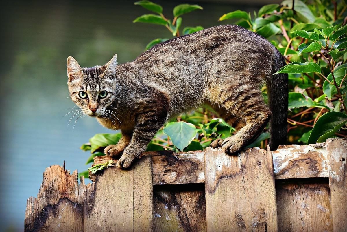 Как узнать есть ли блохи у кота или кошки